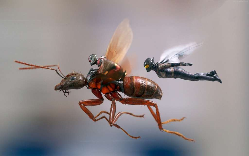 Ant-Man-And-The-Wasp insieme